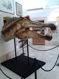 Dinosauri in carne ed ossa! www.facebook.com/museolizzano