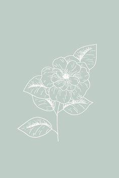 Camellia Floral Illustration - The Language of Flowers - Bea & Bloom Art And Illustration, Floral Illustrations, Pastel Wallpaper, Wallpaper Backgrounds, Floral Drawing, Language Of Flowers, Plant Drawing, Jolie Photo, Camellia