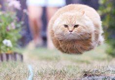 cat funny pics - Google Search