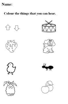 math worksheet : 1000 images about 5 senses on pinterest  5 senses preschool  : Free Kindergarten Science Worksheets