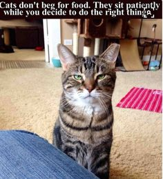 Hahaha! True...they'll stare at you until you give them what they want...so much patience...  :D  LOVE CATS!!!!!!! <3