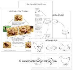 Chicken Life Cycle in 3-Part Cards, Life Cycle Charts and Black-Line Masters
