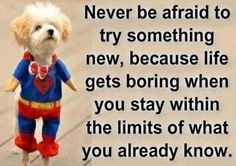 """{Quote} """"Never be afraid to try something new, because life gets boring when you stay within the limits of what you already know."""" Never set limits, go after your dreams, don't be afraid to push the boundaries, & laugh a lot, it's good for you! #PostiveQuote #TickledMummyClub"""