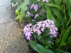 Kew Garden Orchid Festival#festival #garden #kew #orchid Rose Plant Care, Small Flower Pots, Dendrobium Orchids, Planting Roses, Orchidaceae, Large Plants, Kew Gardens, Plant Nursery, Types Of Plants