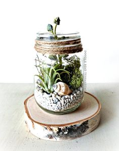 Tillandsia Terrarium Kit / Mason Jar Kit & Air by DoodleBirdie
