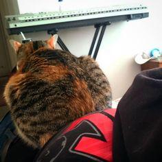 La típica  #gato #cat