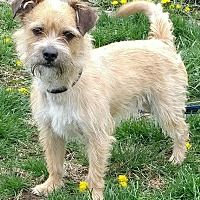 Pin By Azi On Wishes Border Terrier Dogs Terrier