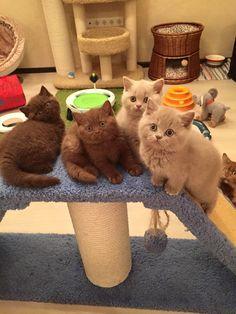 I'll take them all
