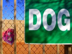 Valentine Crossing: Going to the Dogs by carliewired, via Flickr