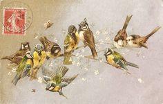 винтажные открытки с птичками. Обсуждение на LiveInternet - Российский Сервис Онлайн-Дневников