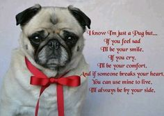 Funny Pug Quotes And Sayings Quotesgram Even Funnier Dogs