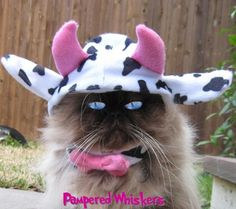 Mad Cow costume cat hat. $14.99, via Etsy.
