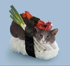 Sushi cat?