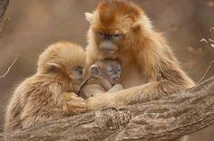 Carinho de mãe...  Veja mais em http://www.comofazer.org