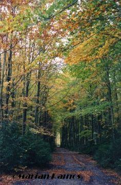 Rincón de Belagua en otoño. Navarra