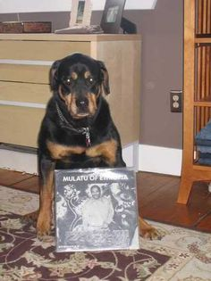 My dead dog :(