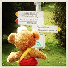 Decisions, decisions... #alps #bayern #germany #steiff #teddybear #knopf #kjmecklenfeld #toy #plush #signs
