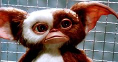 Chris Columbus Reportedly Working Aggressively On 'Gremlins 3'