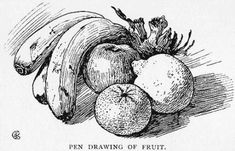 Pen drawing canvas print featuring the drawing pen drawing of fruit by Composition Drawing, Shading Drawing, Pencil Shading, Leaf Drawing, Pen Sketch, Art Sketches, Fruit Sketch, Fruits Drawing, Tinta China