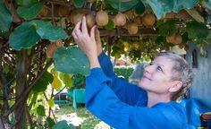 Tomaten Richtig Düngen Und Pflegen Garten Mit Kartoffeln Pflege Tipps
