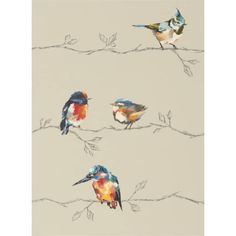Persico - Tapete von Harlequin, glatte Vliestapete Persico ist eine herrliche Darstellung von gemalten Vögeln, die auf Zweigen sitzen. Erhältlich in vier Farbvariationen.