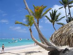 Picture titled Bávaro Beach from our Punta Cana, Dominican Republic photo gallery. Check out this and 24 other pictures of Punta Cana. Manly Beach Australia, Bavaro Beach Punta Cana, Punta Cana Pictures, Beach Pictures, Clearwater Beach, Seychelles, Jamaica, Resorts, Costa Rica