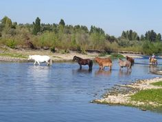 Río Longavi (Chile)