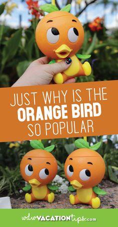 Why the Orange Bird is So Popular Orange Things orange bird World Of Disney Store, Disney World Vacation, Disney Cruise Line, Disney World Resorts, Disney Vacations, Disney Honeymoon, Disney Travel, Disney Tips, Disney Parks