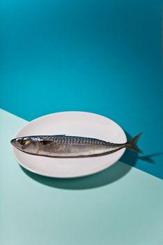 pescado | fishy / Vanessa Strub