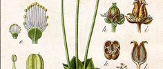 Verlobungsringe Ring Verlobung, Cactus Plants, Wedding, Schmuck, Cacti, Cactus