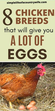 Chicken Breeds For Eggs, Chicken Eggs, Raising Backyard Chickens, Keeping Chickens, Chicken Coop Plans, Diy Chicken Coop, Best Laying Hens, Different Breeds Of Chickens, Hobby Farms