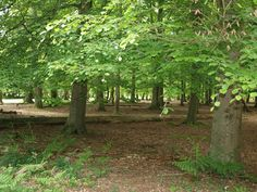 Wilverley Enclosure in the New Forest, Hampshire