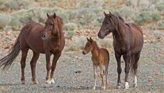 The Ian Somerhalder Foundation Announces $20,000 in Grants for Wild Horse Fertility Control   Ian Somerhalder Foundation