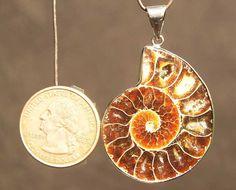 Hey, ho trovato questa fantastica inserzione di Etsy su https://www.etsy.com/it/listing/164505627/ciondolo-fossile-di-ammonite-naturale