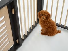 BAD MARLON : Dog Fence