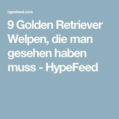 9 Golden Retriever Welpen, die man gesehen haben muss - HypeFeed