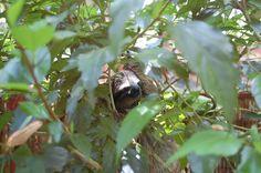 Hello Mr Sloth
