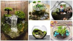 You can create miniature terrarium gardens, small water gardens, or combine the both options. There are no rules and restrictions. You…