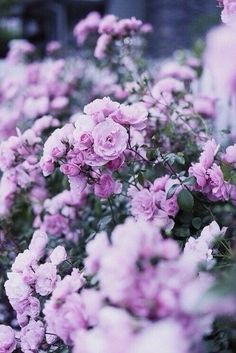 Discovered by Pinterest @appellesapothecary www.appelles.com #inspiration