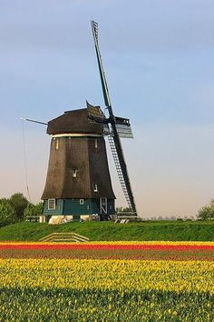 Holland, the Land of Tulips and Windmills #windmills #Holland #travel