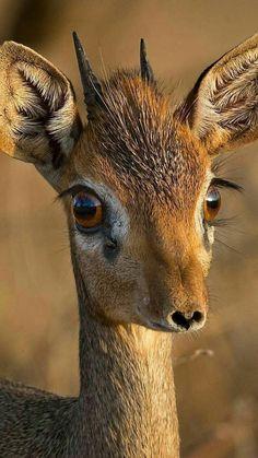 No! These are not false eyelashes!!!