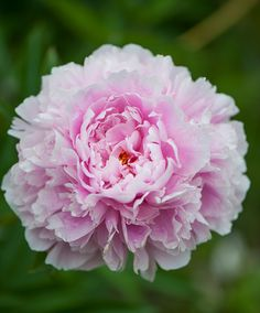 Flower Wallpaper, Rose, Floral, Flowers, Plants, Art Things, Beauty, Underarm, Gardening