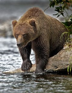 """500px / Photo """"The Challenge """" by Buck Shreck"""