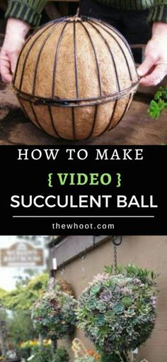 This Succulent Sphere DIY is easy when you know how and you are going to love the stunning results. This Succulent Sphere DIY is easy when you know how and you are going to love the stunning results. Succulent Gardening, Succulent Terrarium, Hydroponic Gardening, Hydroponics, Organic Gardening, Container Gardening, Garden Plants, Gardening Tips, Indoor Gardening