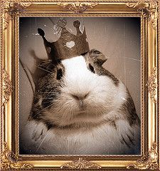 hahaha-it's the Guinea Queen!