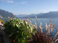 Montreux, Switzerland Switzerland, Around The Worlds, Mountains, Nature, Travel, Viajes, Traveling, Nature Illustration, Off Grid