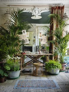 The Plants at Sera's, London – Green Obsessions