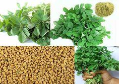 Uses Of Fenugreek In Siddha Medicine