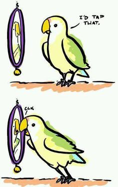 Check out This is how birds work. funny picture and laugh at thousands other hilarious pics and witty images. Funny Birds, Cute Birds, Funny Animals, Cute Animals, Small Animals, Pretty Birds, Funny Quotes About Self, Funny Cute, The Funny