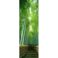 Path Through Bamboo Forest Kyoto Japan Canvas Art - Panoramic Images (36 x 12)